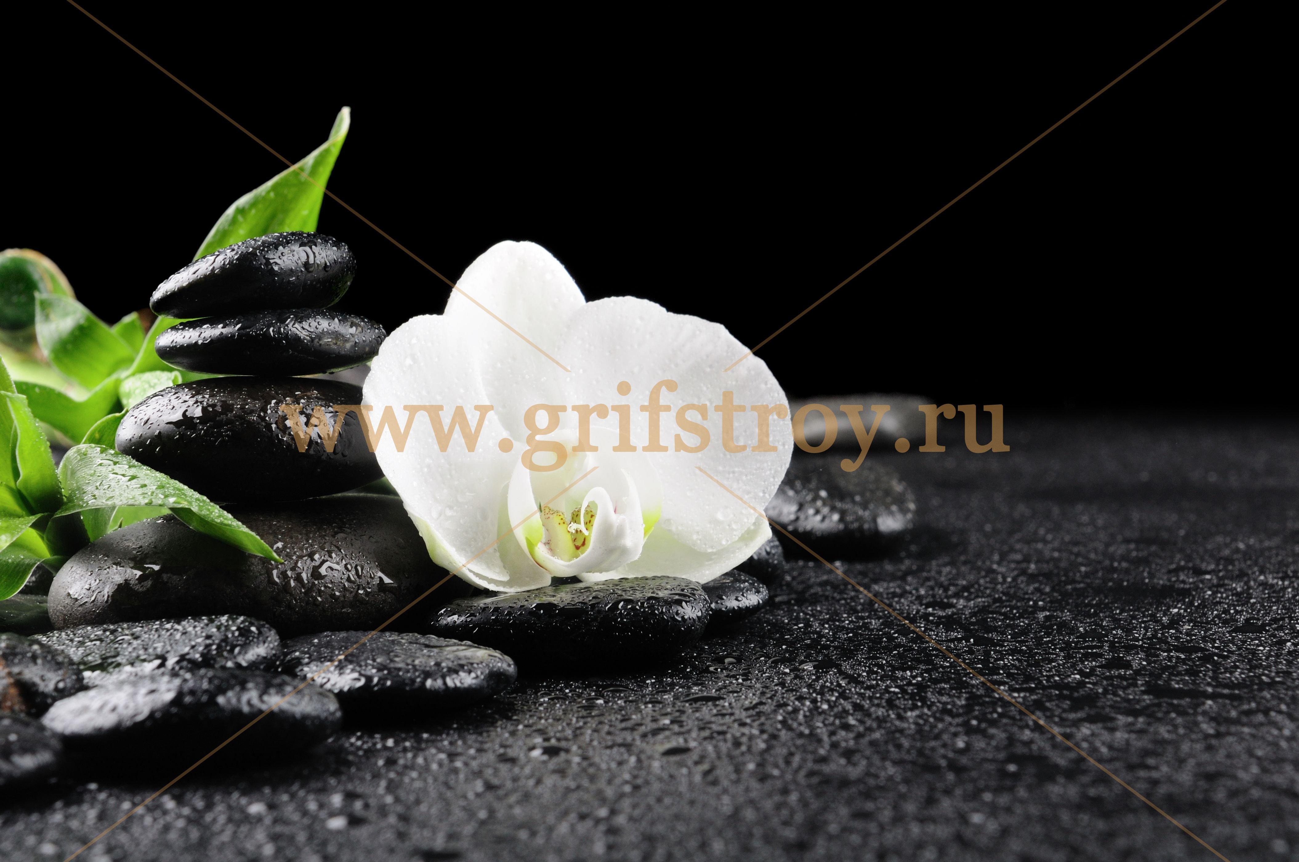 Цветы белые камни